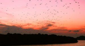 3D/ 2N Komodo National Park Tour
