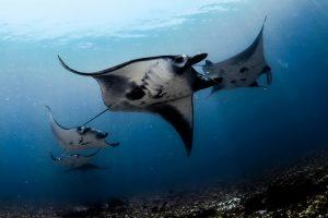 Snorkeling Package around Komodo