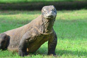 1Day Komodo Island Tour
