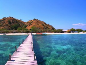 Daily Komodo Tour by Fast Boat